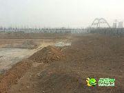清山漫香林的实景图
