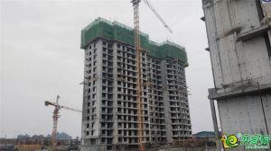 工程实景图2018.11.29