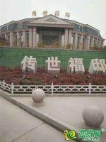 传世福邸售楼处实景图2018.12.01