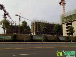 绿城诚园工地实景图2019.7.12