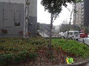 隆基新谊城小区实景图