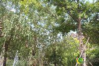 绿都温莎城堡小区实景图