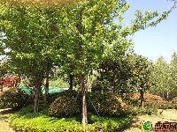 绿都温莎城堡小区实景