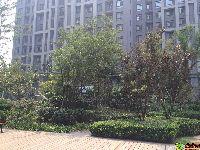 绿都枫景上东