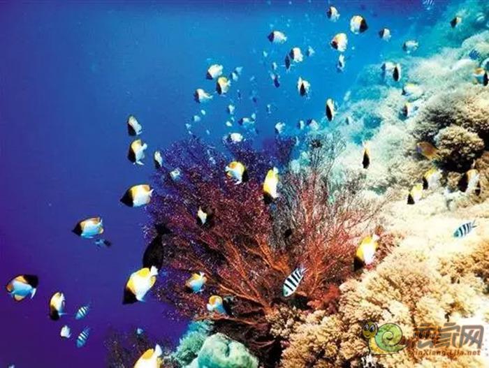 壁纸 海底 海底世界 海洋馆 水族馆 桌面 700_527